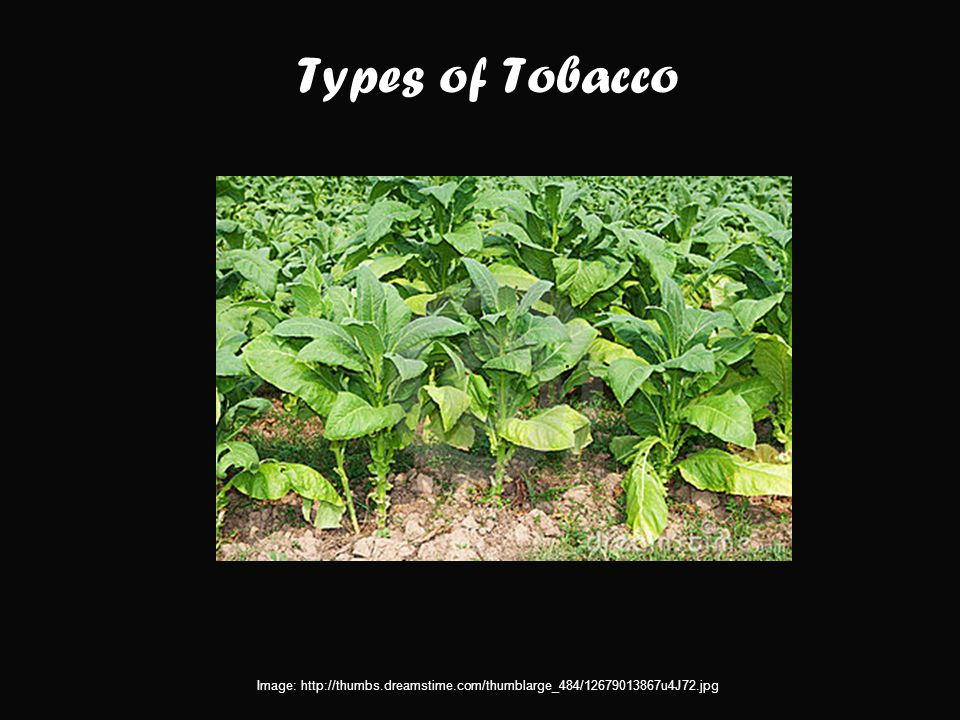 Types of Tobacco Image: http://thumbs.dreamstime.com/thumblarge_484/12679013867u4J72.jpg