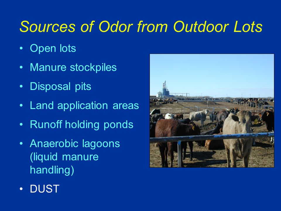 Sources of Odor from Outdoor Lots Open lots Manure stockpiles Disposal pits Land application areas Runoff holding ponds Anaerobic lagoons (liquid manure handling) DUST