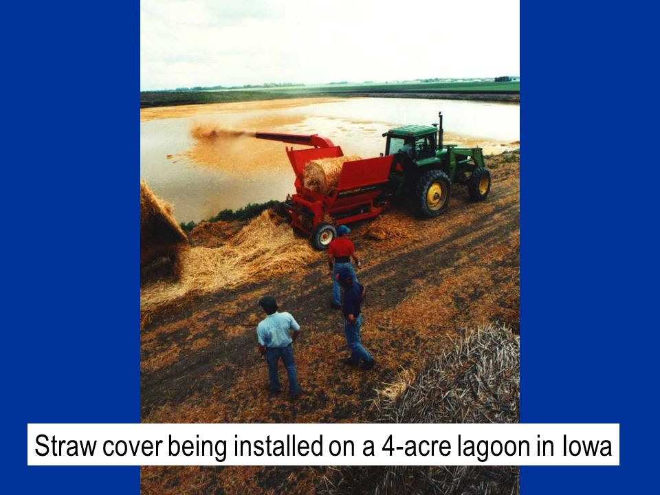 Straw cover being installed on a 4-acre lagoon in Iowa