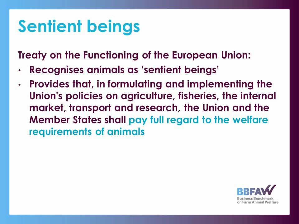 EU Action Plan & Strategy European Commission adopted a Community Action Plan on the Welfare of Animals for the period 2006-2010 Commission is currently preparing the Second EU Strategy for Animal Welfare for the period to 2015
