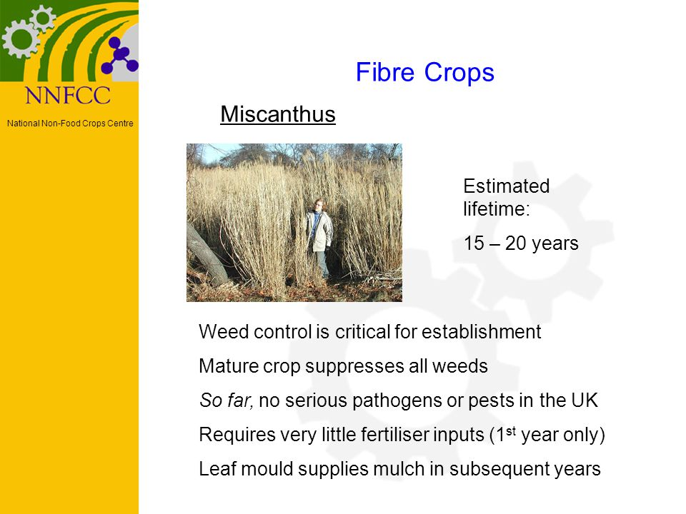 National Non-Food Crops Centre Miscanthus Fibre Crops Weed control is critical for establishment Mature crop suppresses all weeds So far, no serious pathogens or pests in the UK Requires very little fertiliser inputs (1 st year only) Leaf mould supplies mulch in subsequent years Estimated lifetime: 15 – 20 years
