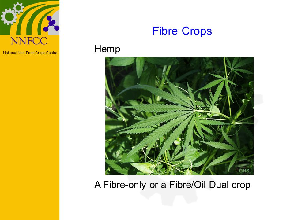 National Non-Food Crops Centre Hemp Fibre Crops A Fibre-only or a Fibre/Oil Dual crop