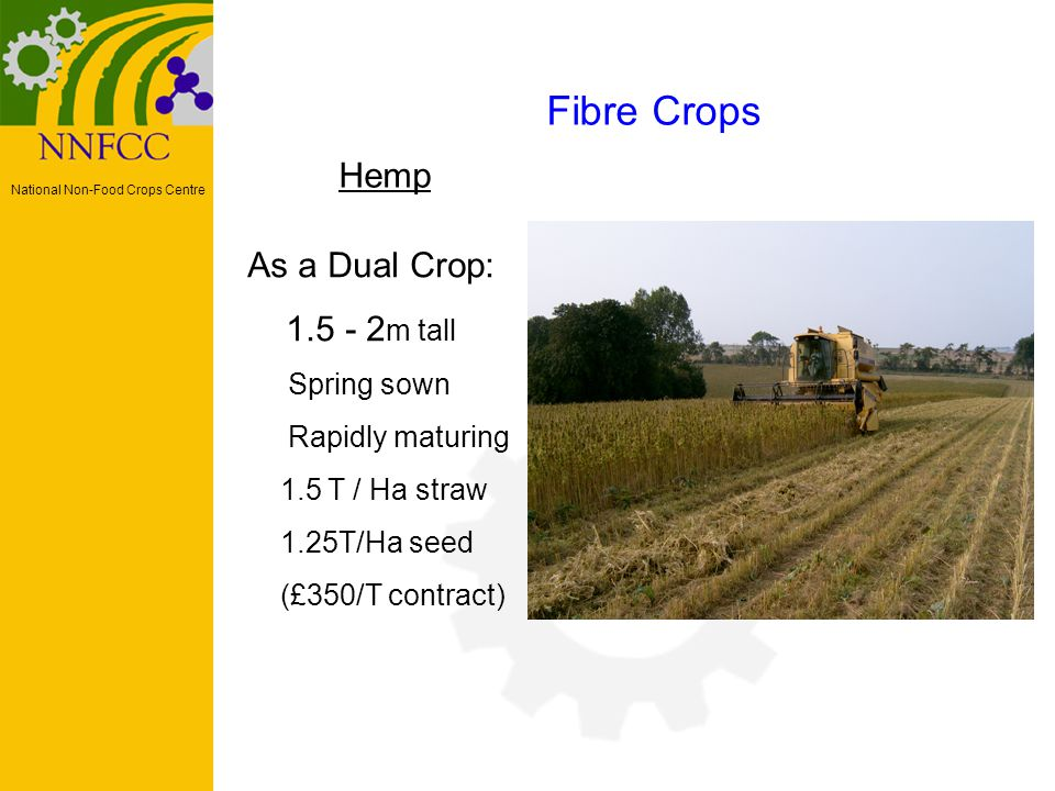 National Non-Food Crops Centre Hemp Fibre Crops As a Dual Crop: 1.5 - 2 m tall Spring sown Rapidly maturing 1.5 T / Ha straw 1.25T/Ha seed (£350/T contract)