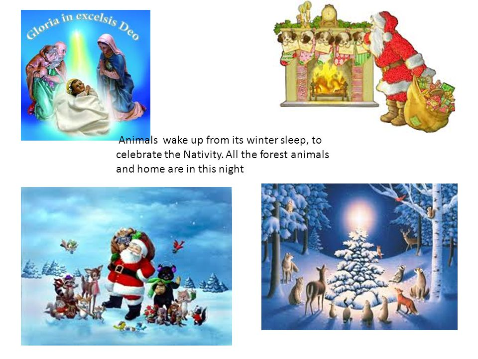Animals wake up from its winter sleep, to celebrate the Nativity. All the forest animals and home are in this night