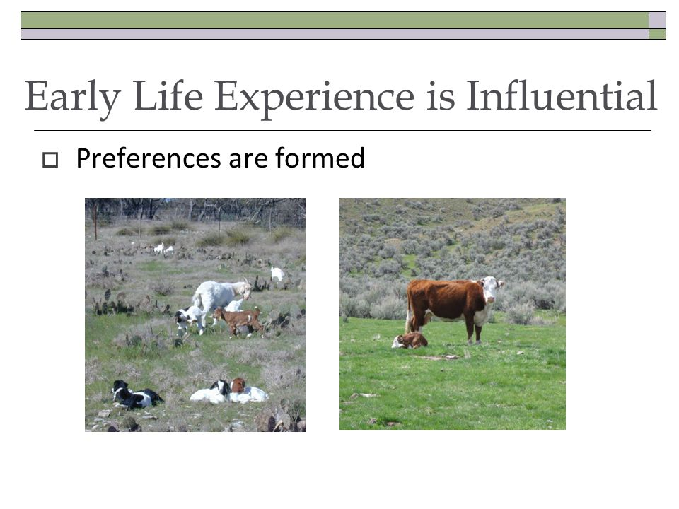 Early Life Experience is Influential  Preferences are formed