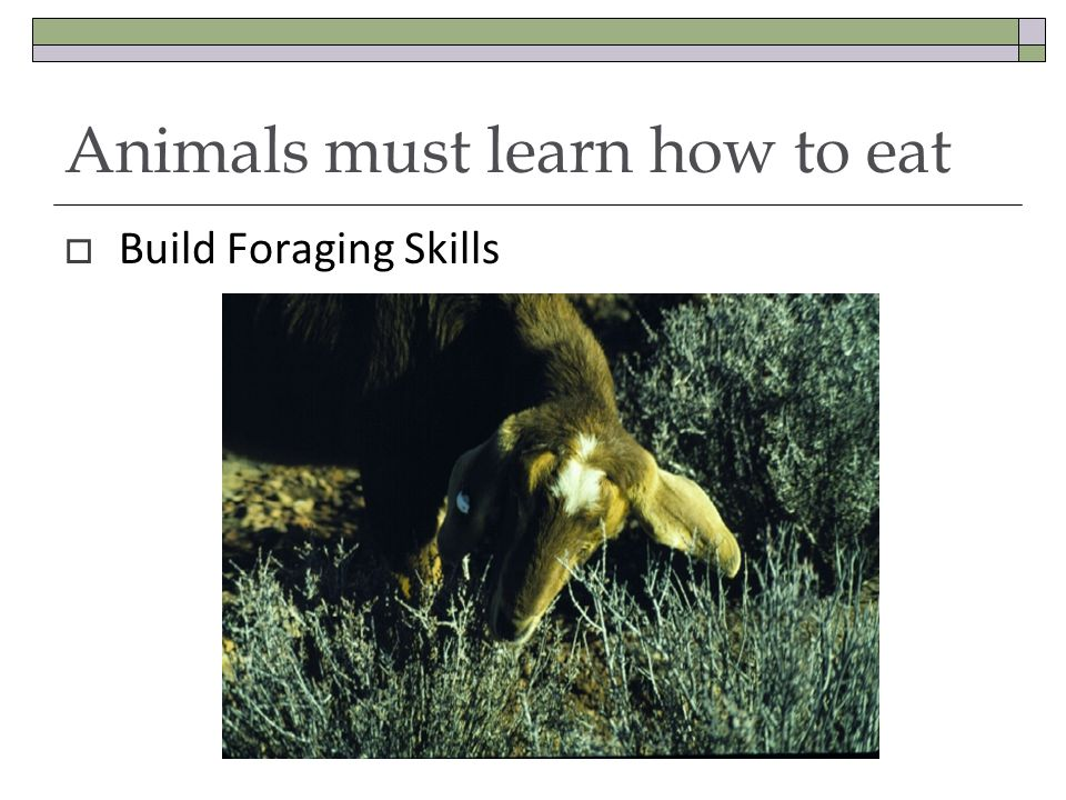 Animals must learn how to eat  Build Foraging Skills