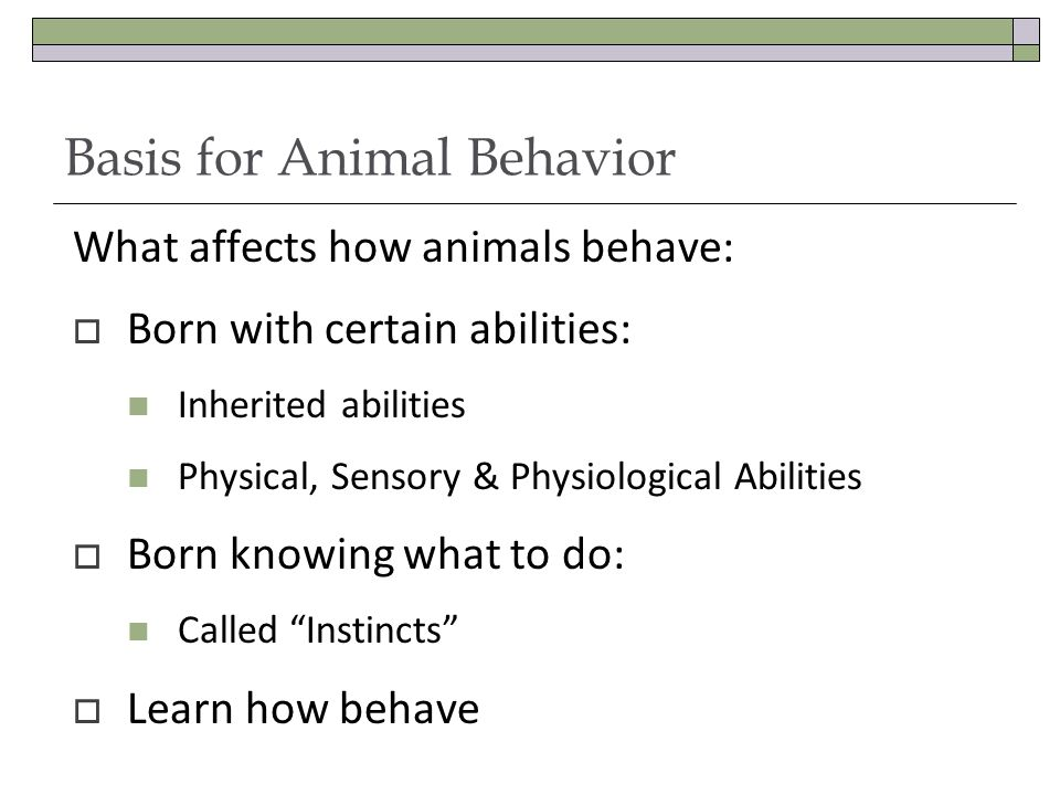 Basis for Animal Behavior What affects how animals behave:  Born with certain abilities: Inherited abilities Physical, Sensory & Physiological Abilities  Born knowing what to do: Called Instincts  Learn how behave