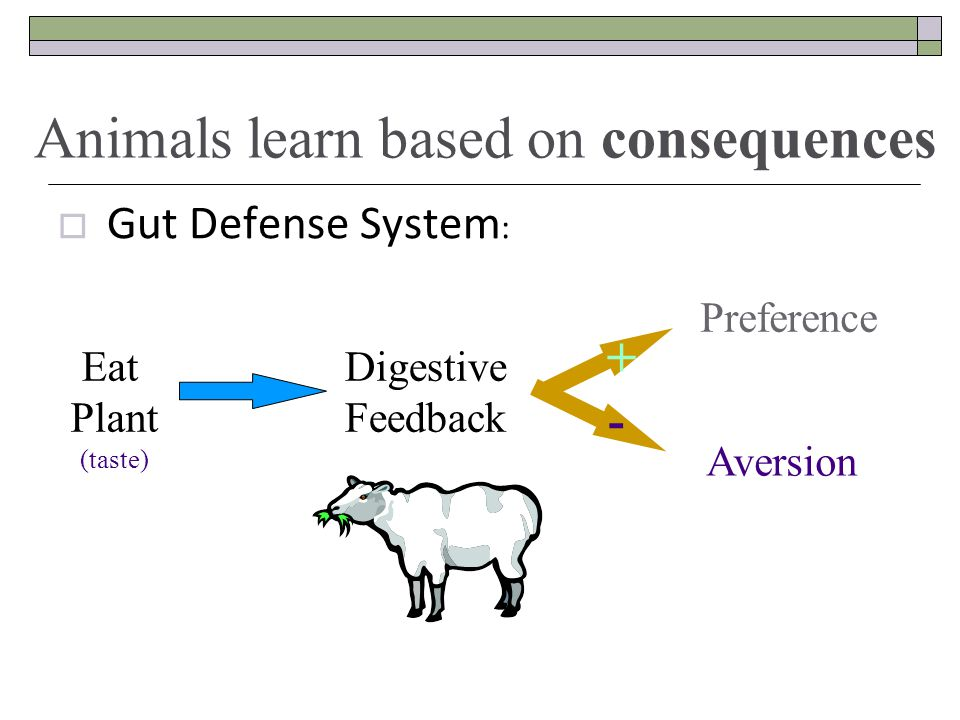  Gut Defense System : Eat Plant (taste) Digestive Feedback + - Preference Aversion Animals learn based on consequences