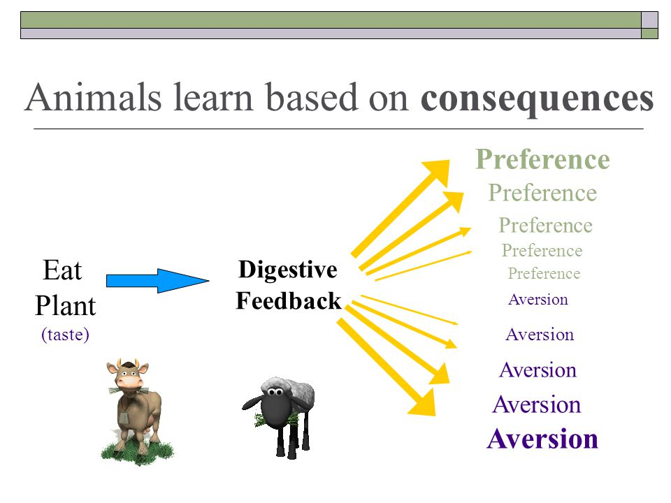 Digestive Feedback Aversion Aversion Aversion Aversion Aversion Preference Preference Preference Preference Eat Plant (taste) Animals learn based on consequences