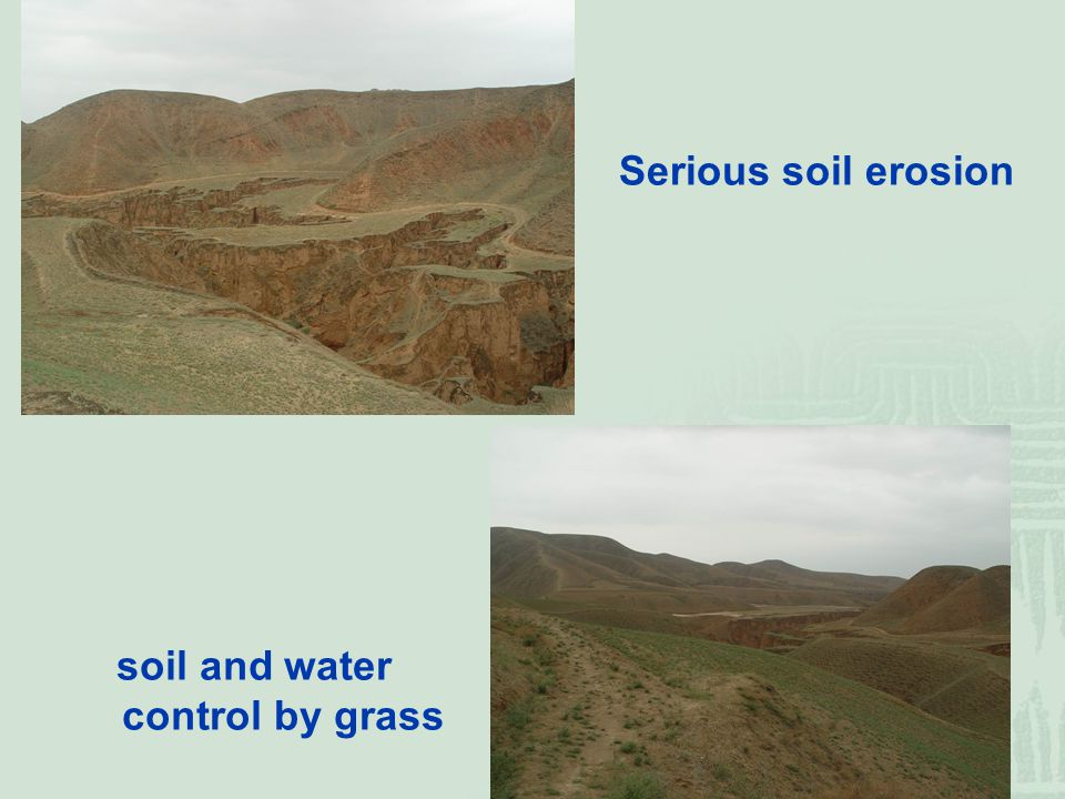Serious soil erosion soil and water control by grass
