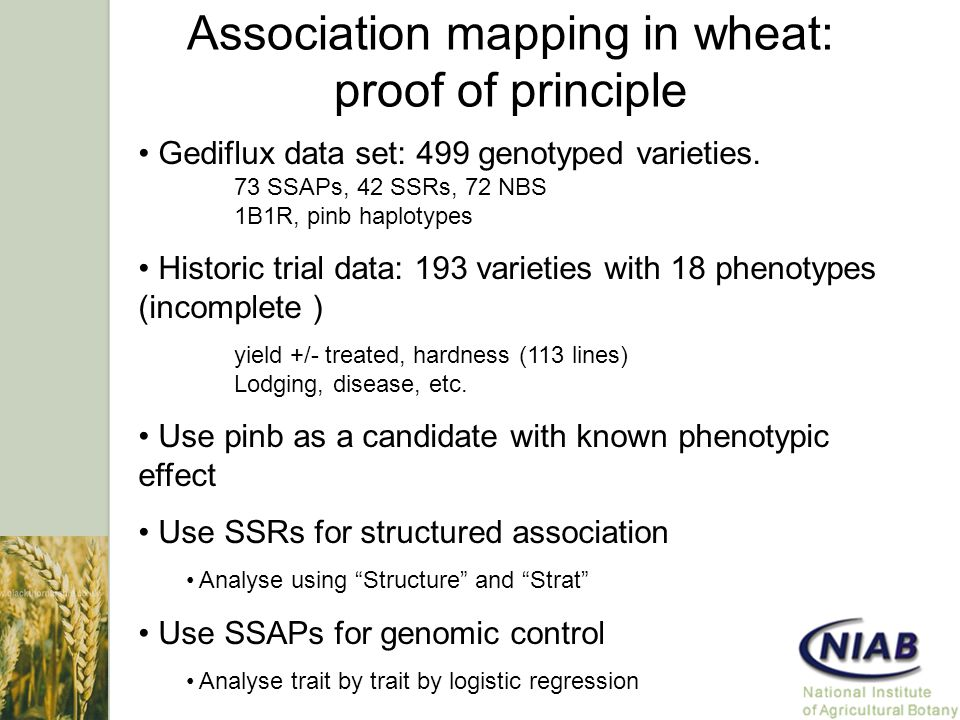 Association mapping in wheat: proof of principle Gediflux data set: 499 genotyped varieties.