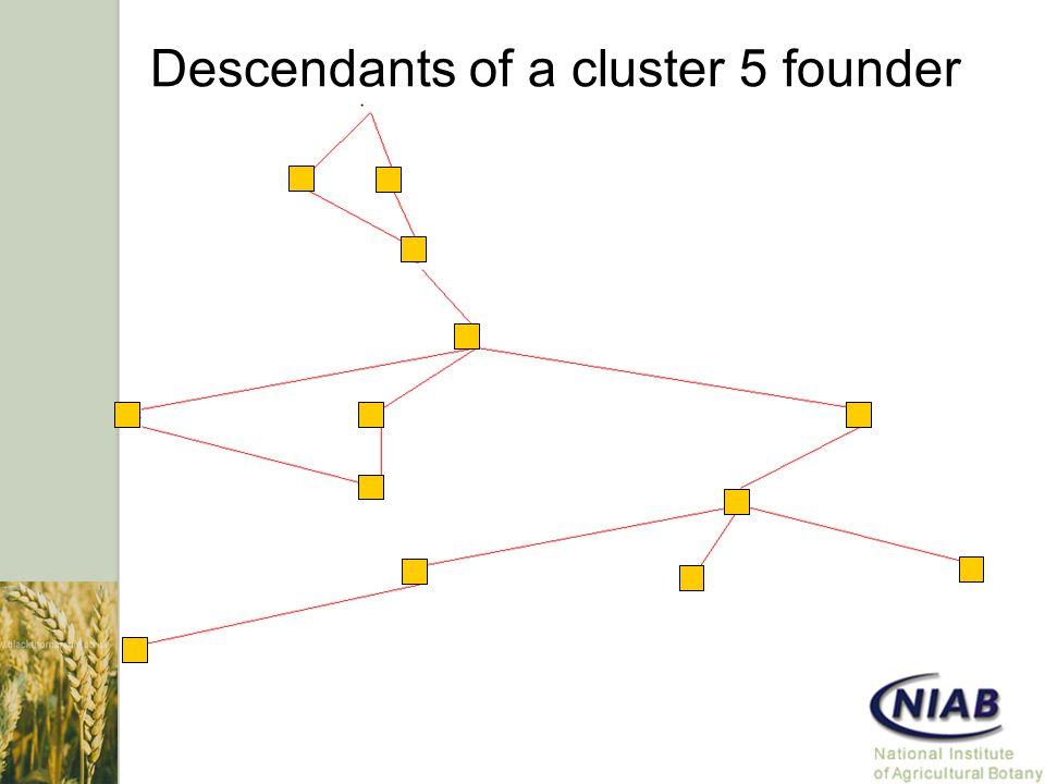 Descendants of a cluster 5 founder