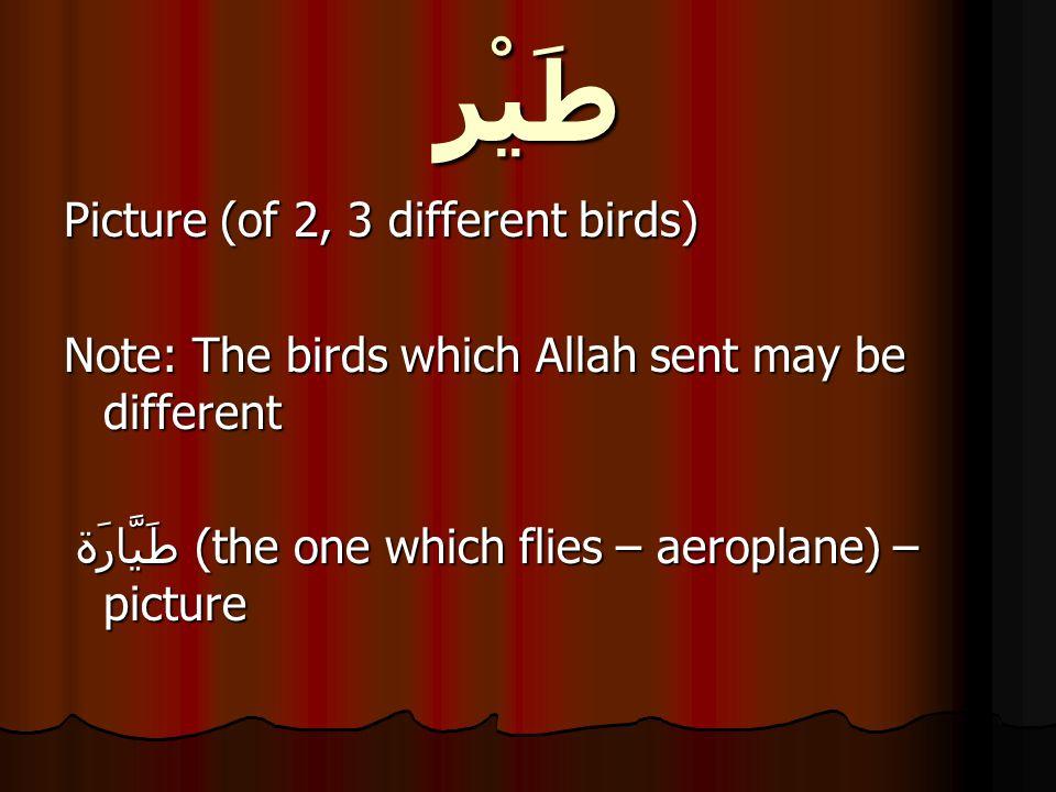 طَيْر Picture (of 2, 3 different birds) Note: The birds which Allah sent may be different طَيَّارَة (the one which flies – aeroplane) – picture