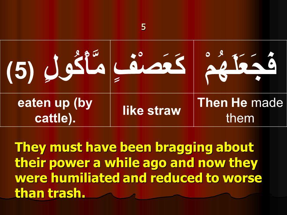 5 فَجَعَلَهُمْكَعَصْفٍ مَّأْكُولٍ ( 5) Then He made them like straw eaten up (by cattle).