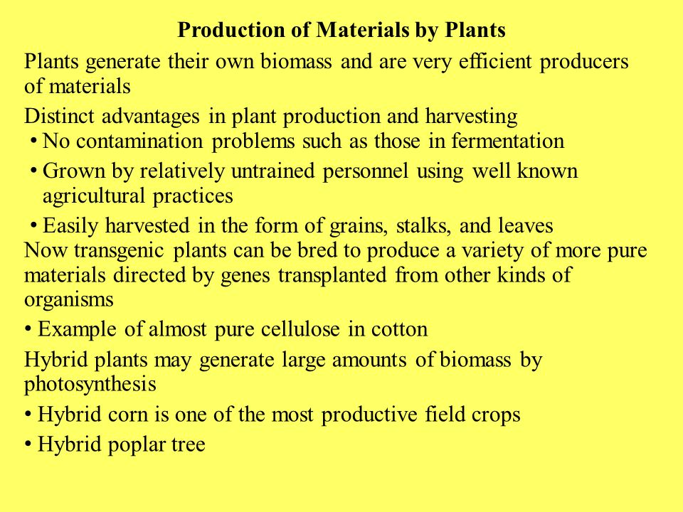 Production of Materials by Plants Plants generate their own biomass and are very efficient producers of materials Distinct advantages in plant product