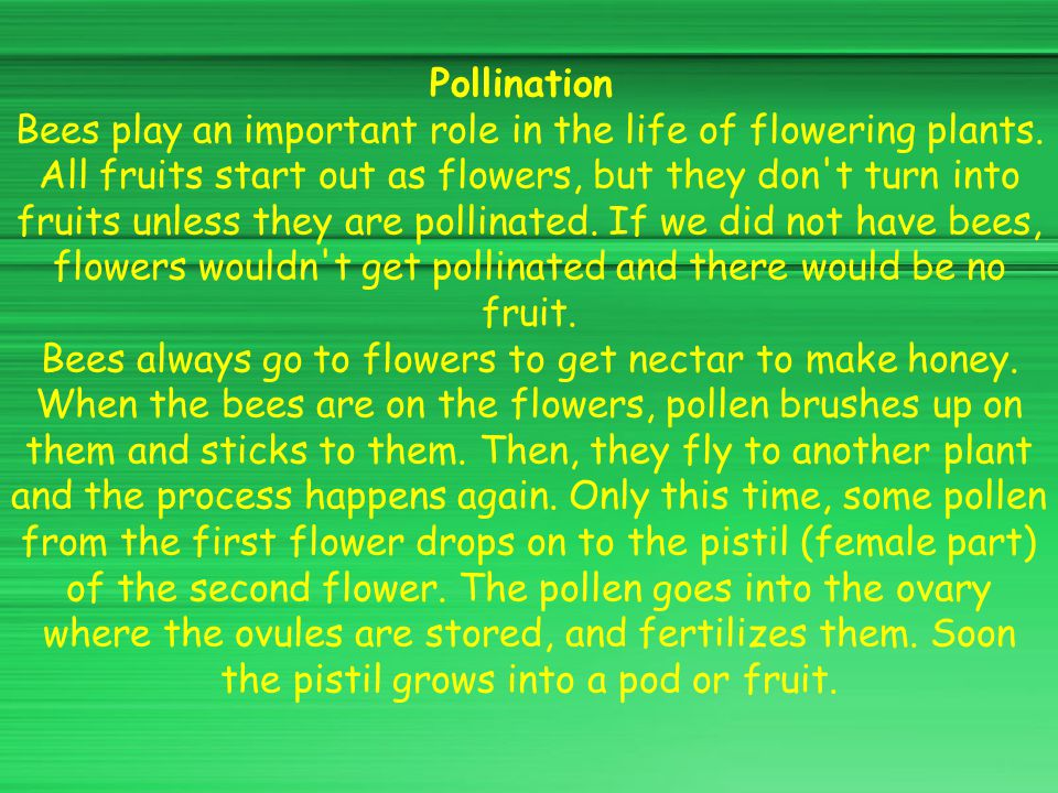 Pollination Bees play an important role in the life of flowering plants.