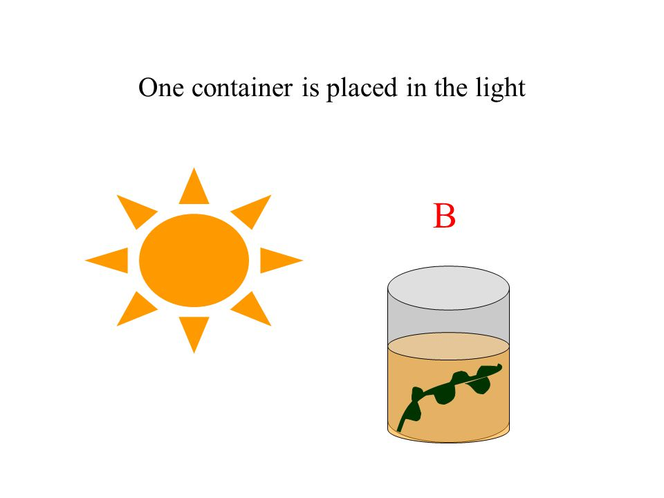 One container is placed in the dark A