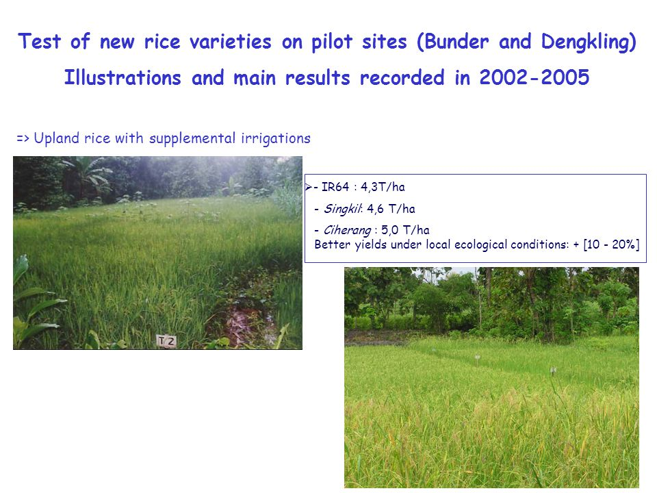  - IR64 : 4,3T/ha - Singkil: 4,6 T/ha - Ciherang : 5,0 T/ha Better yields under local ecological conditions: + [10 - 20%] Test of new rice varieties