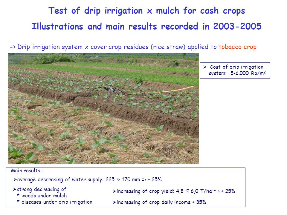 => Drip irrigation system x cover crop residues (rice straw) applied to tobacco crop Main results :  average decreasing of water supply: 225  170 mm => - 25%  strong decreasing of * weeds under mulch * diseases under drip irrigation  increasing of crop yield: 4,8  6,0 T/ha = > + 25%  increasing of crop daily income + 35% Test of drip irrigation x mulch for cash crops Illustrations and main results recorded in 2003-2005  Cost of drip irrigation system: 5-6.000 Rp/m 2