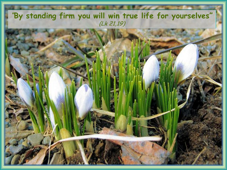 By standing firm you will win true life for yourselves (Lk 21,19)