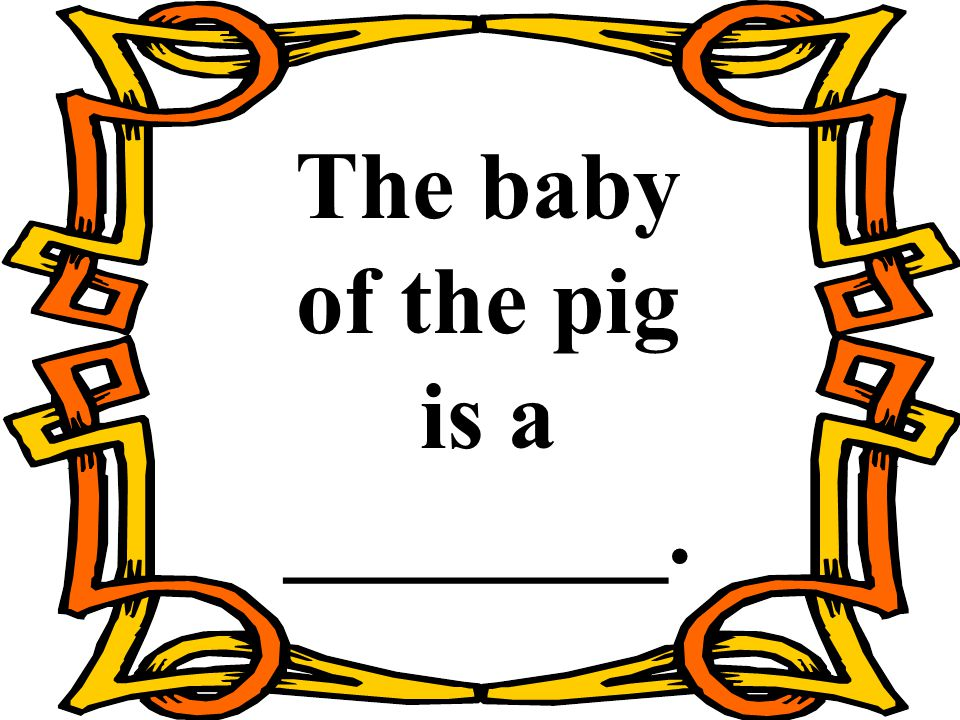The baby of the pig is a ________.