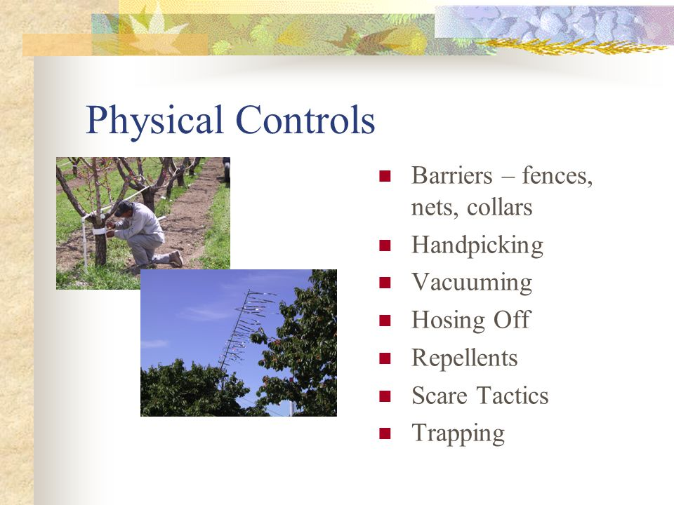 Physical Controls Barriers – fences, nets, collars Handpicking Vacuuming Hosing Off Repellents Scare Tactics Trapping