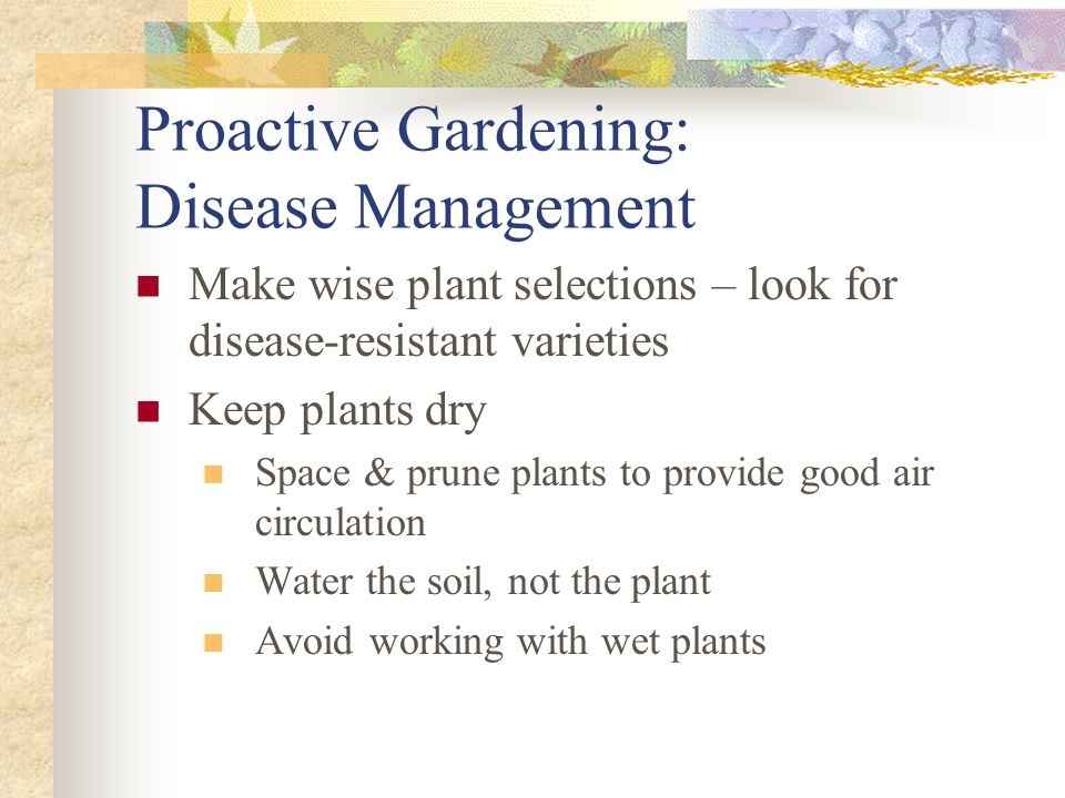 Proactive Gardening: Disease Management Make wise plant selections – look for disease-resistant varieties Keep plants dry Space & prune plants to prov