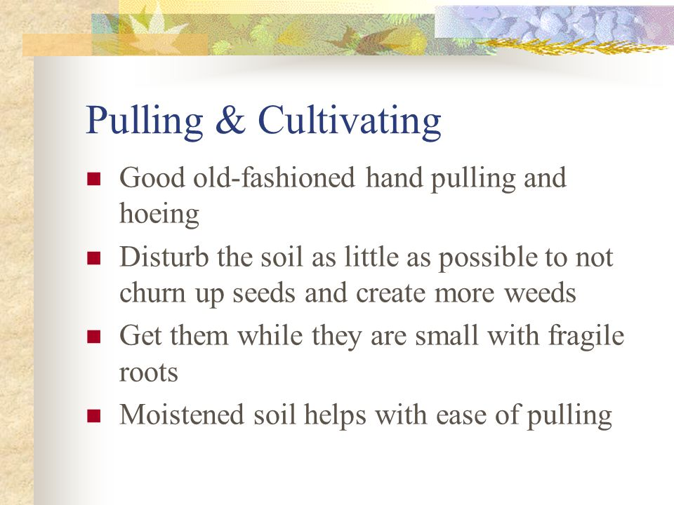 Pulling & Cultivating Good old-fashioned hand pulling and hoeing Disturb the soil as little as possible to not churn up seeds and create more weeds Ge