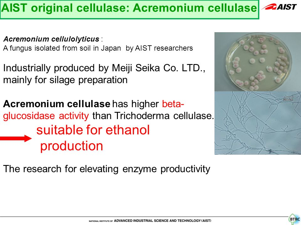 Acremonium cellulolyticus : A fungus isolated from soil in Japan by AIST researchers Industrially produced by Meiji Seika Co.