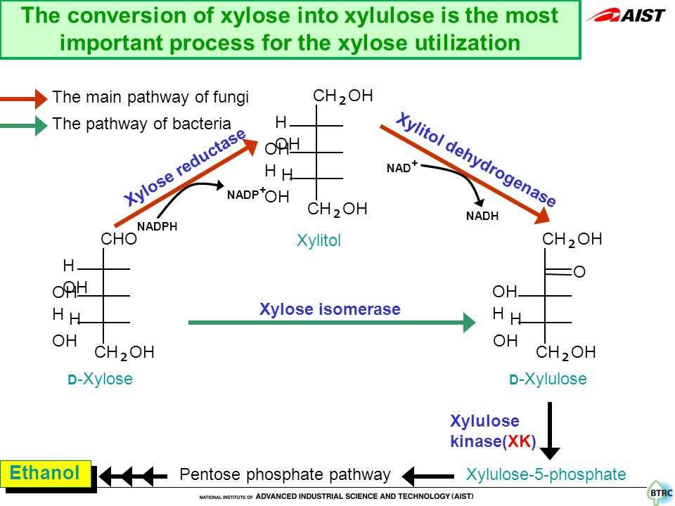 CHO H OH OH H H OH CH 2 OH H OH OH H H OH CH 2 OH O OH H H OH CH 2 OH D -Xylose Xylitol D -Xylulose Xylose isomerase Xylose reductase Xylitol dehydrogenase Xylulose-5-phosphate Pentose phosphate pathway Xylulose kinase(XK) Ethanol The main pathway of fungi The pathway of bacteria NADPH NADP + NAD + NADH The conversion of xylose into xylulose is the most important process for the xylose utilization