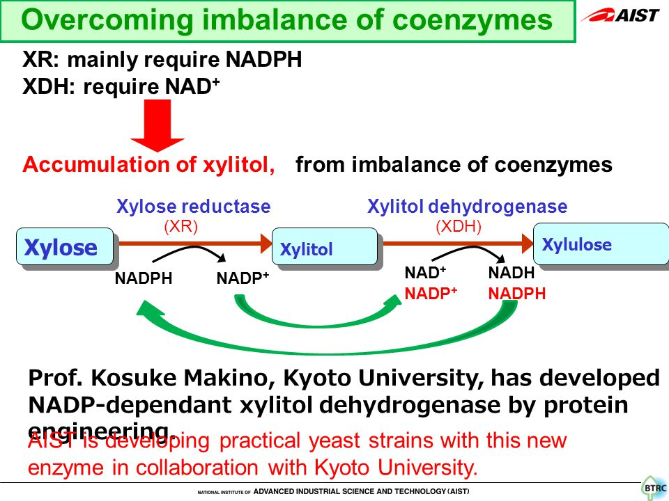 XR: mainly require NADPH XDH: require NAD + Accumulation of xylitol, from imbalance of coenzymes Xylose reductase NADPH NADP + Xylitol dehydrogenase NAD + NADH Xylose Xylitol Xylulose Prof.