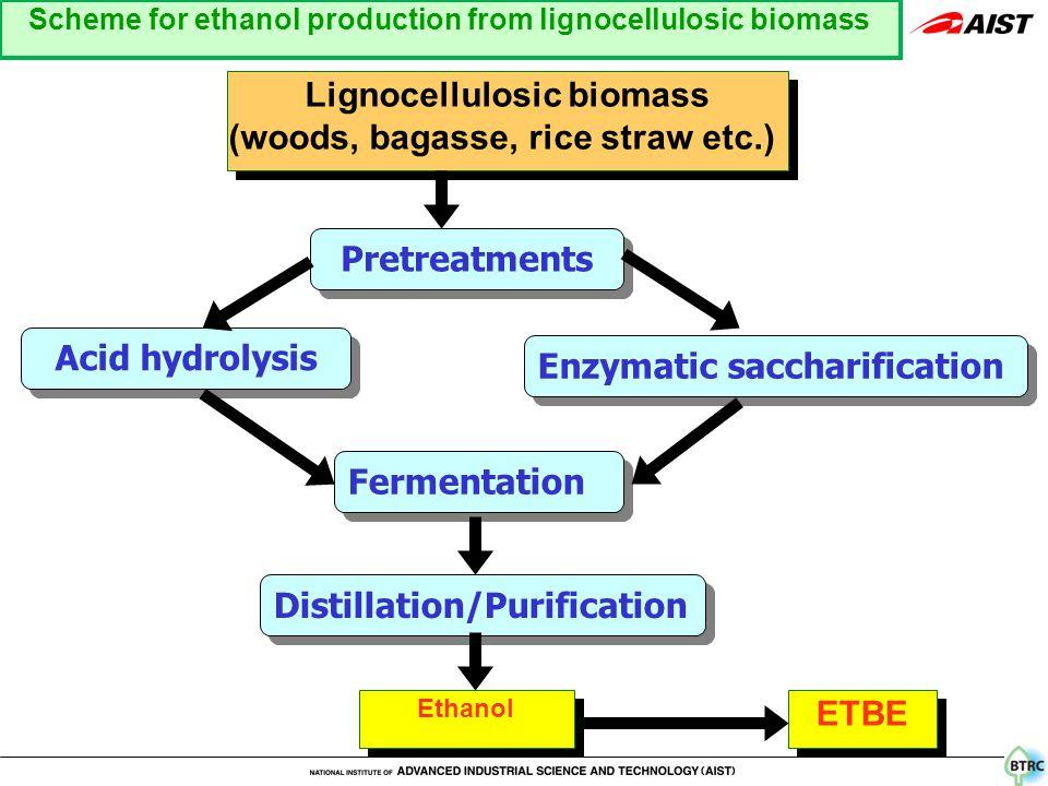 Pretreatments Enzymatic saccharification Acid hydrolysis Fermentation Distillation/Purification Ethanol ETBE Lignocellulosic biomass (woods, bagasse, rice straw etc.) Lignocellulosic biomass (woods, bagasse, rice straw etc.) Scheme for ethanol production from lignocellulosic biomass