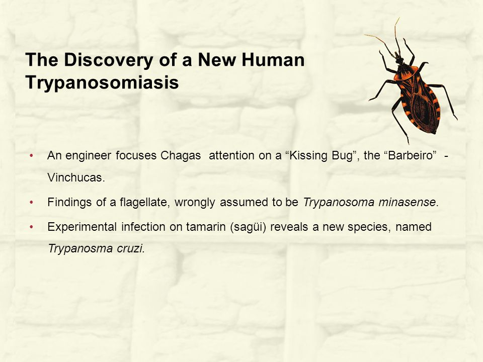 An engineer focuses Chagas attention on a Kissing Bug , the Barbeiro - Vinchucas.