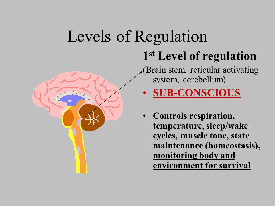 Levels of Regulation 1 st Level of regulation (Brain stem, reticular activating system, cerebellum) SUB-CONSCIOUS Controls respiration, temperature, sleep/wake cycles, muscle tone, state maintenance (homeostasis), monitoring body and environment for survival