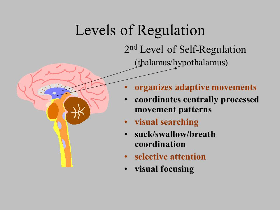 Levels of Regulation 2 nd Level of Self-Regulation (thalamus/hypothalamus) organizes adaptive movements coordinates centrally processed movement patterns visual searching suck/swallow/breath coordination selective attention visual focusing