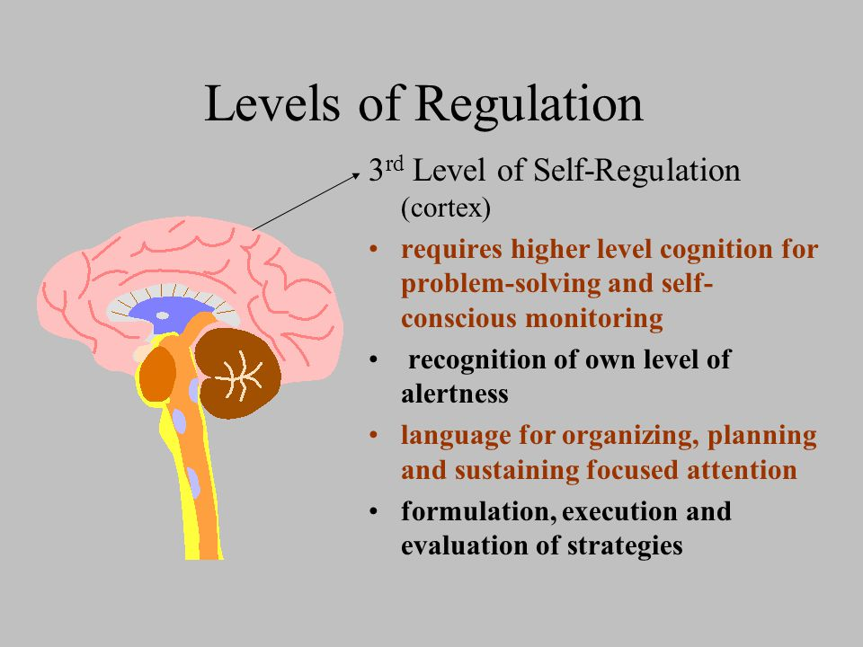 Levels of Regulation 3 rd Level of Self-Regulation (cortex) requires higher level cognition for problem-solving and self- conscious monitoring recognition of own level of alertness language for organizing, planning and sustaining focused attention formulation, execution and evaluation of strategies
