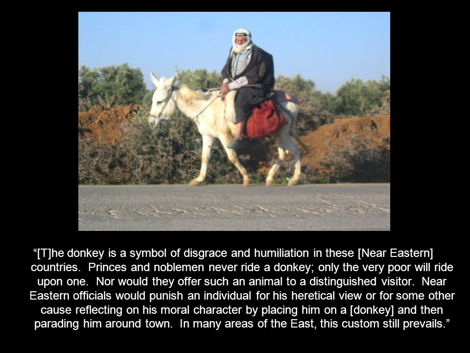 [T]he donkey is a symbol of disgrace and humiliation in these [Near Eastern] countries.