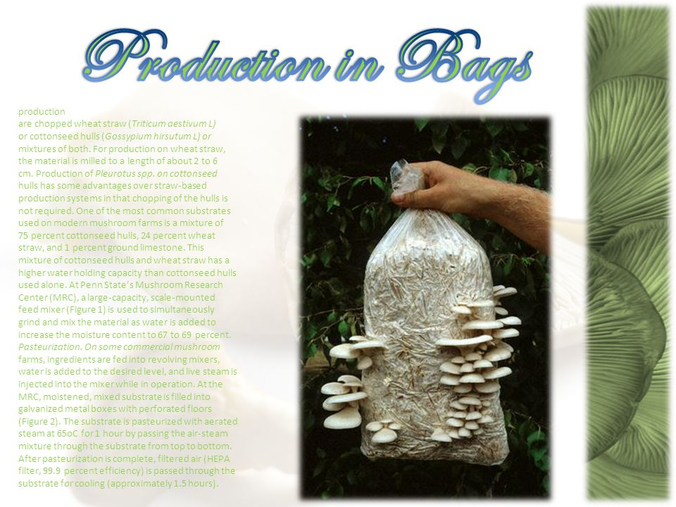 A very good source of selenium and also providing vitamin D, the popular mushroom provides a good nutritional mixture.
