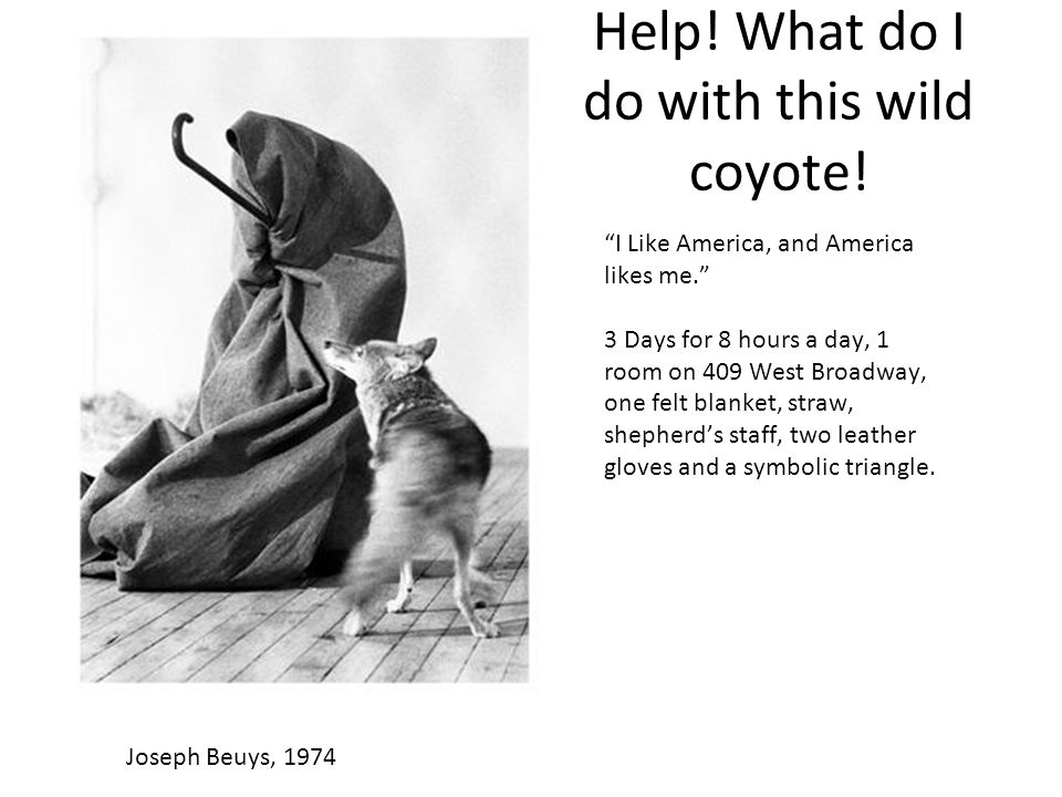Beuys earns trust of the coyote.They hug on the final day.