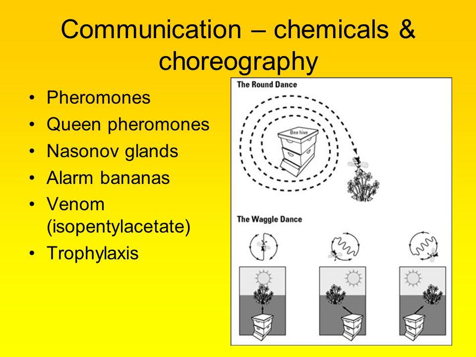 Communication – chemicals & choreography Pheromones Queen pheromones Nasonov glands Alarm bananas Venom (isopentylacetate) Trophylaxis