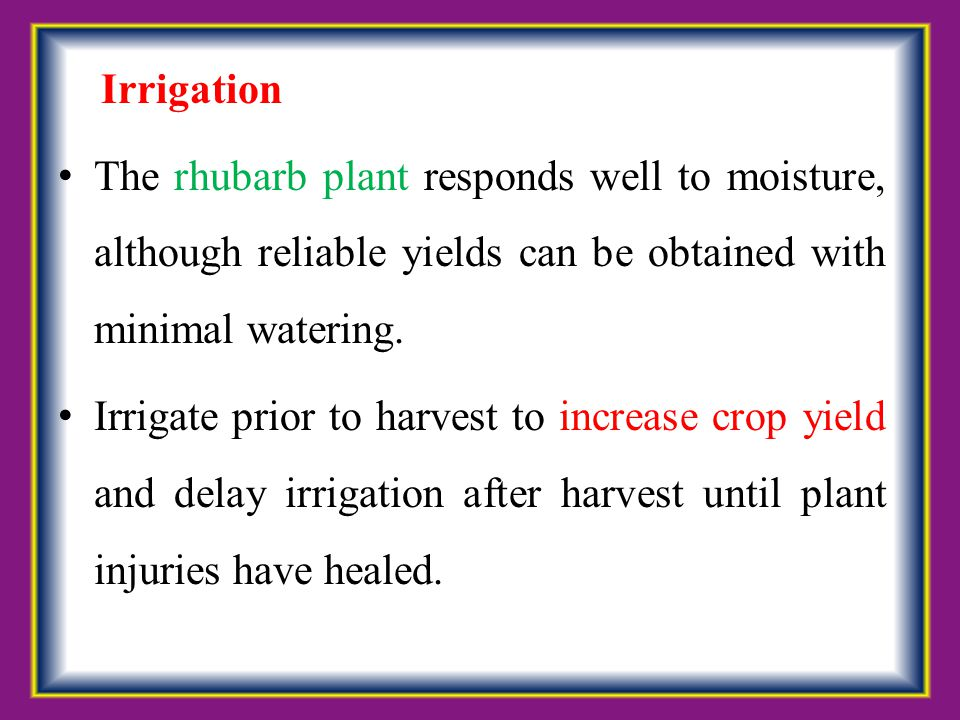 Irrigation The rhubarb plant responds well to moisture, although reliable yields can be obtained with minimal watering. Irrigate prior to harvest to i