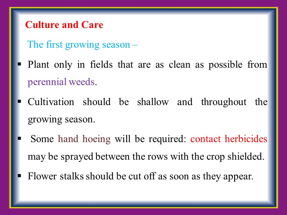 Culture and Care The first growing season –  Plant only in fields that are as clean as possible from perennial weeds.  Cultivation should be shallow