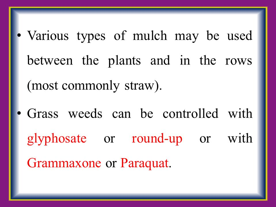 Various types of mulch may be used between the plants and in the rows (most commonly straw). Grass weeds can be controlled with glyphosate or round-up
