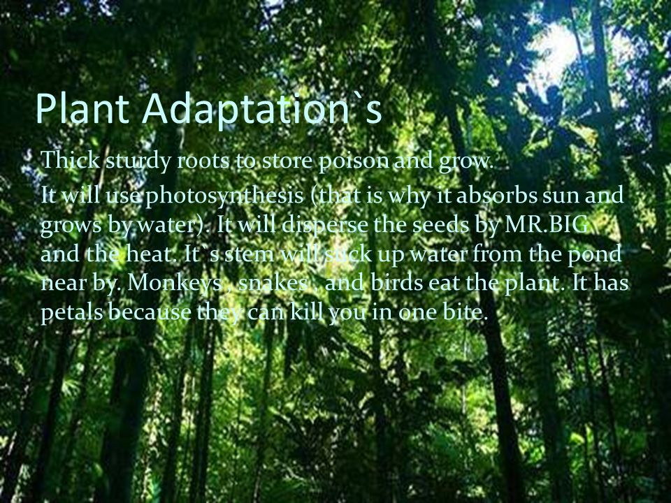 Plant Adaptation`s Thick sturdy roots to store poison and grow. It will use photosynthesis (that is why it absorbs sun and grows by water). It will di
