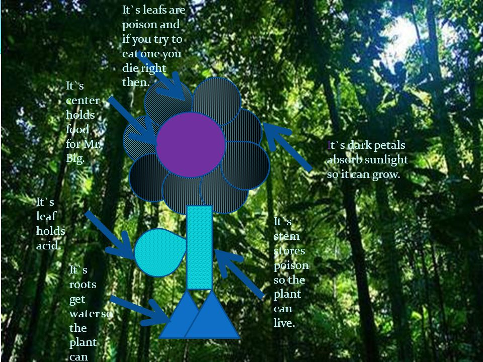 It`s center holds food for Mr. Big. It`s stem stores poison so the plant can live. It`s dark petals absorb sunlight so it can grow. It`s leaf holds ac