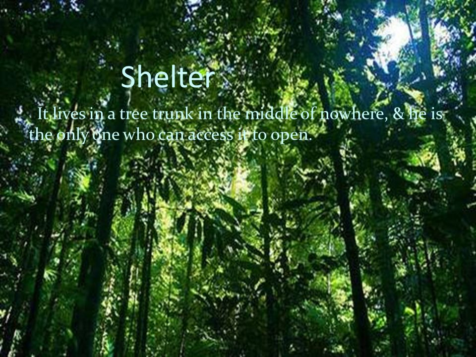 Shelter It lives in a tree trunk in the middle of nowhere, & he is the only one who can access it to open.