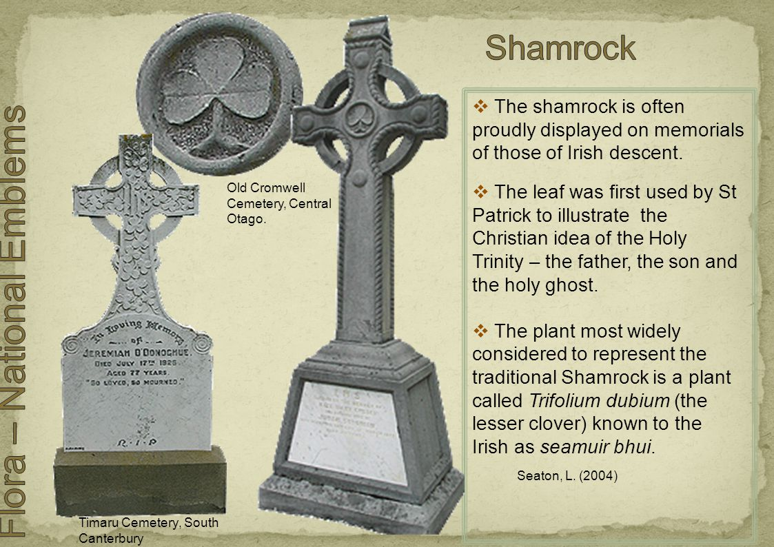  The shamrock is often proudly displayed on memorials of those of Irish descent.