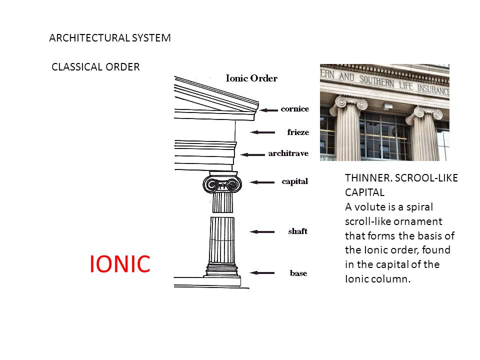 ARCHITECTURAL SYSTEM CLASSICAL ORDER THINNER. SCROOL-LIKE CAPITAL A volute is a spiral scroll-like ornament that forms the basis of the Ionic order, f