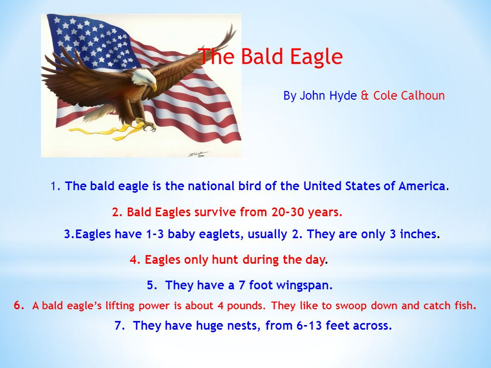 The Bald Eagle 1. The bald eagle is the national bird of the United States of America.
