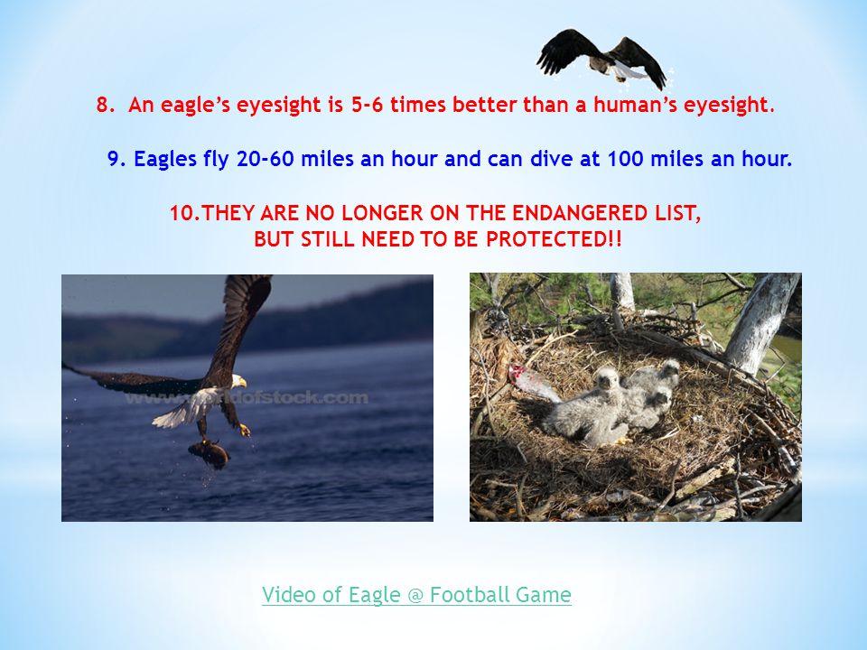 8. An eagle's eyesight is 5-6 times better than a human's eyesight.